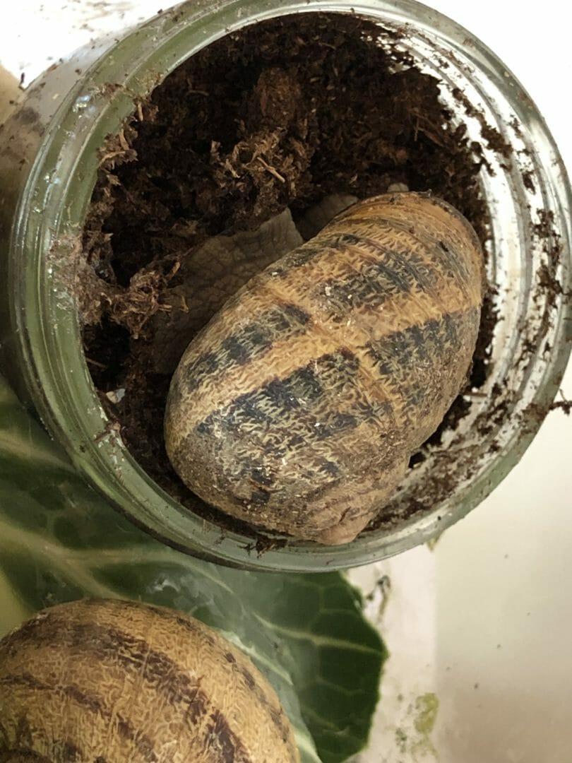 Nouvelles des escargots de PS…